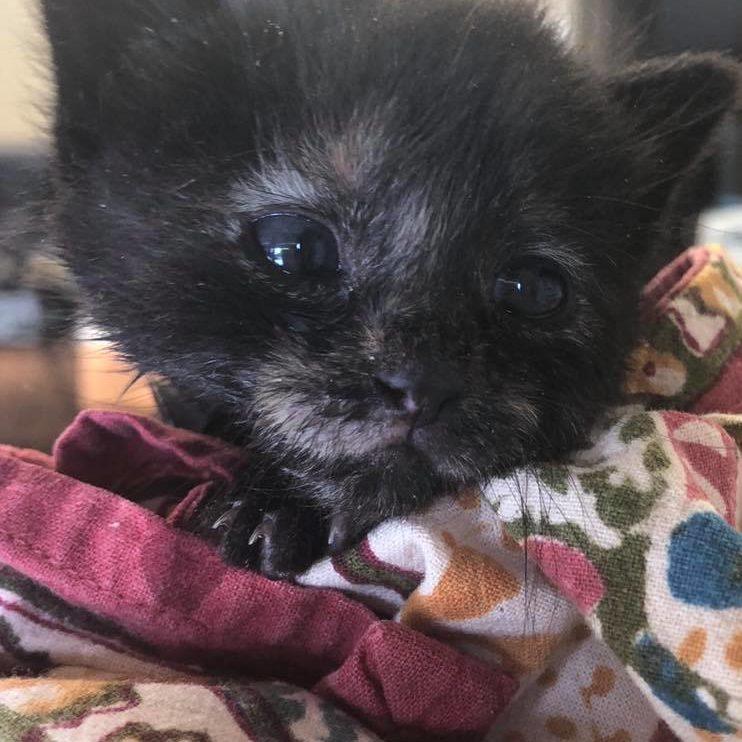 Kitten-Looking